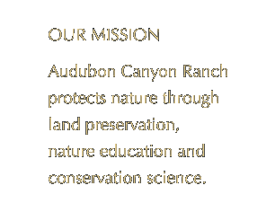 Audubon Canyon Ranch protects nature through land preservation, nature education, and conservation science.
