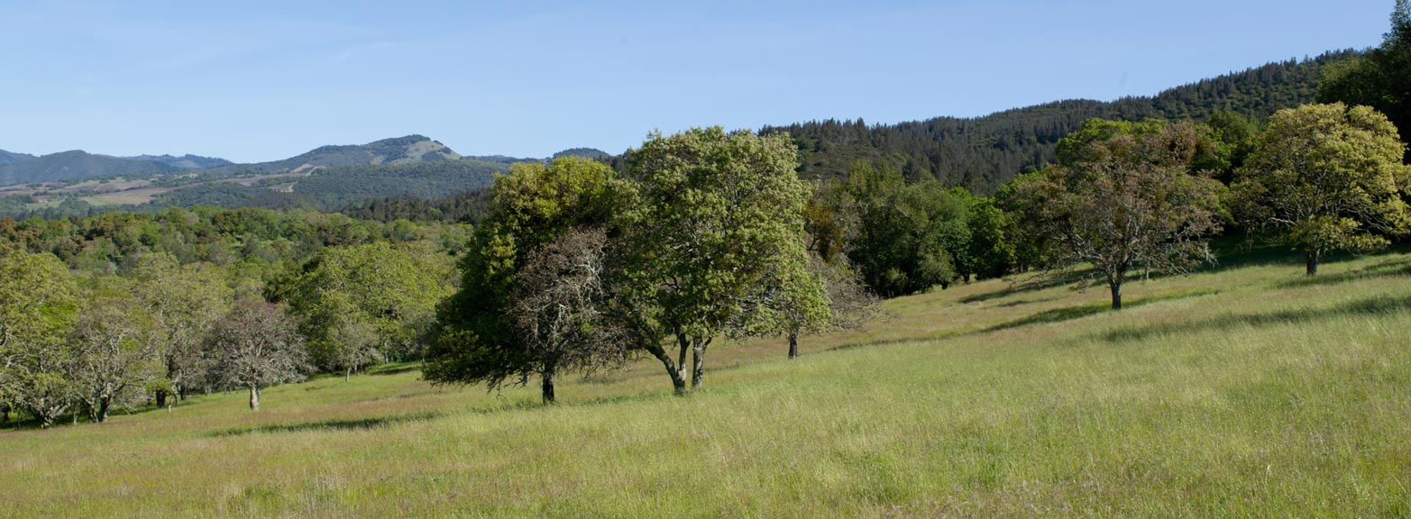 Bouverie Preserve of Audubon Canyon Ranch