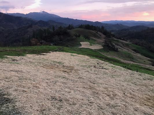 Native grass seed and straw have been applied to dozer lines