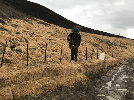 Land Steward Kyle Doron uses fence posts to anchor bales of weed-free rice straw at the base of a badly damaged hillside