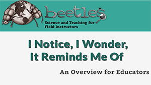 beetles-i-wonder.png