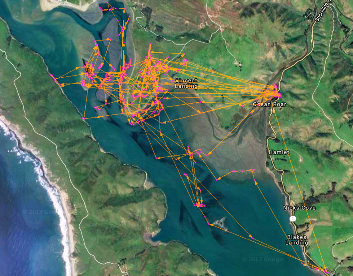 great_egret_telemetry_tracks_northern_tomales_bay.png