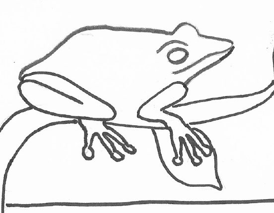 Tree frog lifecycle coloring sheet